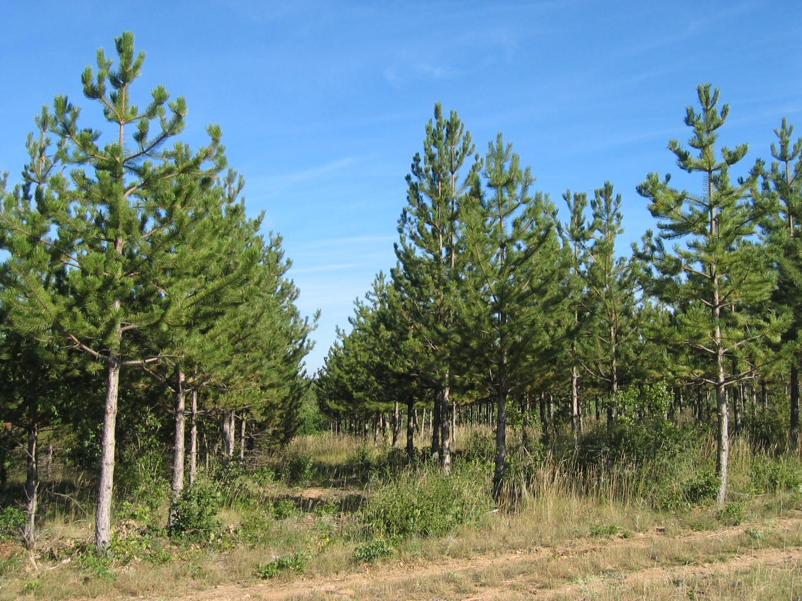 Planter des arbres pour stocker du CO2? Rencontre avec Luc Poyer