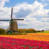 Développer la filière du Petit Éolien en France : quel mode d'emploi ?