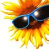 [Partie 2] Ces idées qui pourraient révolutionner la production verte d'électricité : l'énergie solaire